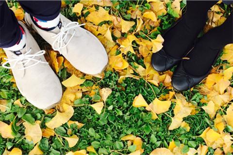 緑とイチョウの葉